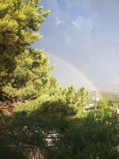 #rainbow #thru