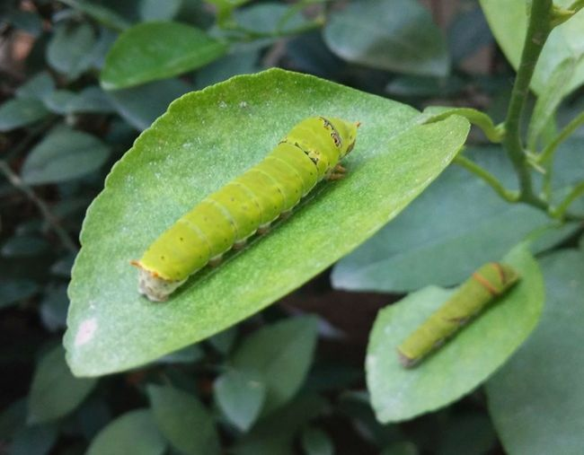 Hi Caterpillar Budddy Green Color Close-up Leafs 🍃 Leafs Photography The Week On EyeEm