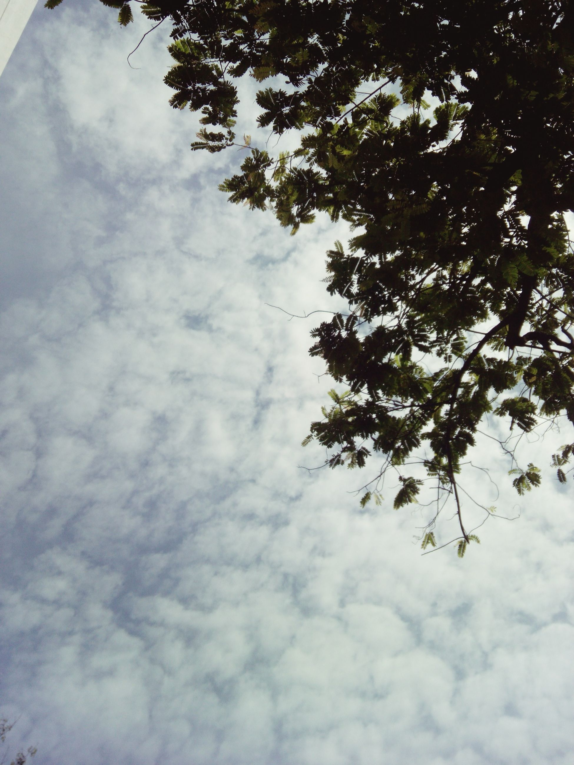 low angle view, tree, sky, branch, growth, cloud - sky, nature, cloudy, beauty in nature, tranquility, cloud, day, outdoors, leaf, no people, high section, scenics, tranquil scene, white color, sunlight