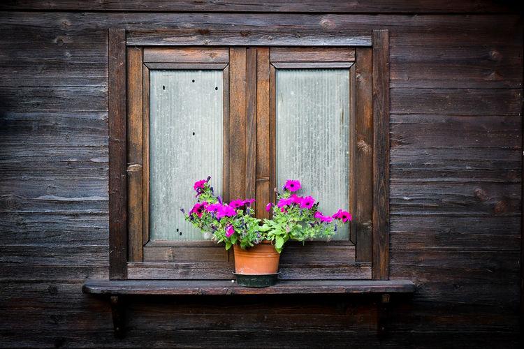 Flower pot on wooden door of house