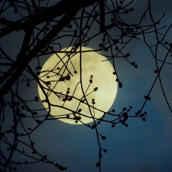 Full moon 🌝 Tree Branch Sky Nature Low Angle View Silhouette Moon Scenics - Nature Beauty In Nature