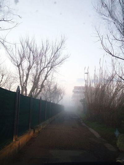 Tree Bare Tree Fog Sky Weather
