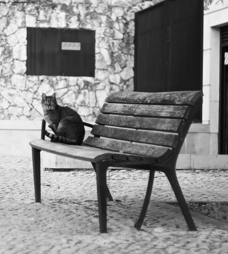 Built Structure Seat Mammal Animal Bench Animal Themes Sitting Relaxation One Animal Domestic Animals Domestic Building Exterior Cat Vertebrate Pets No People Day Architecture Domestic Cat Feline