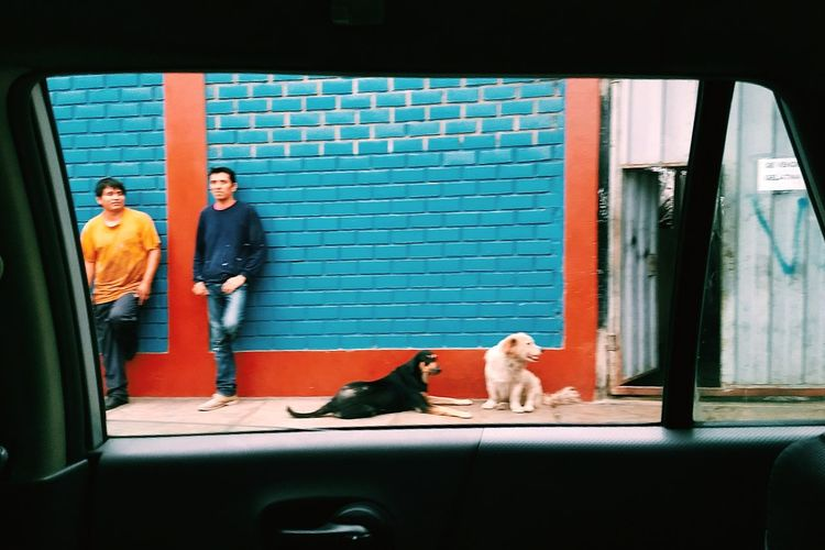 Framing Around. Streetphotography Vscox Limaperu Pets Stories From The City