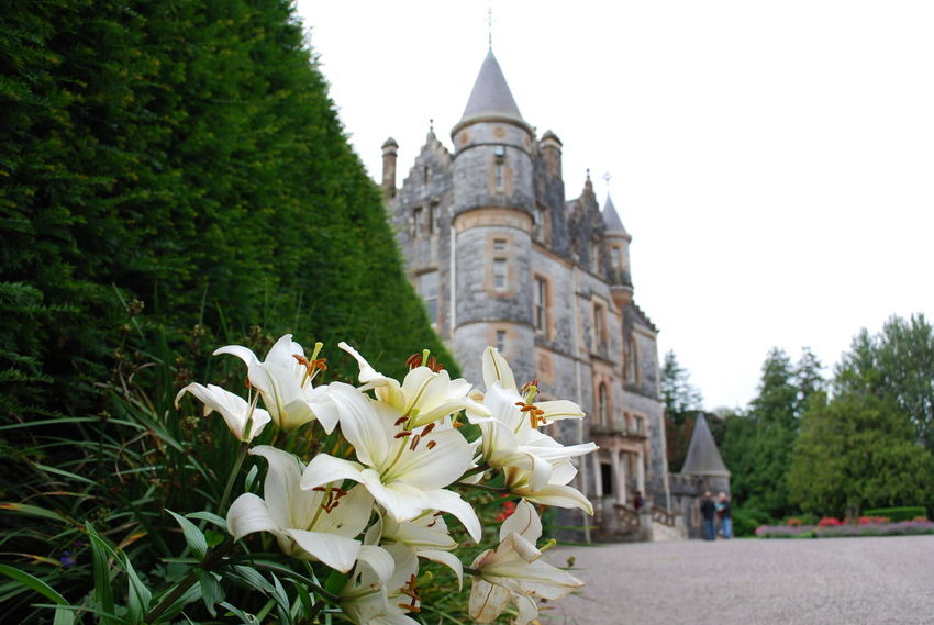 Blarney Castle Flowers House Ireland Manor Manor House Nature White Feel The Journey Home My Favorite Place
