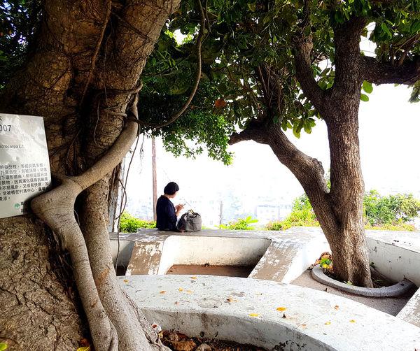 Man sitting on tree trunk against plants
