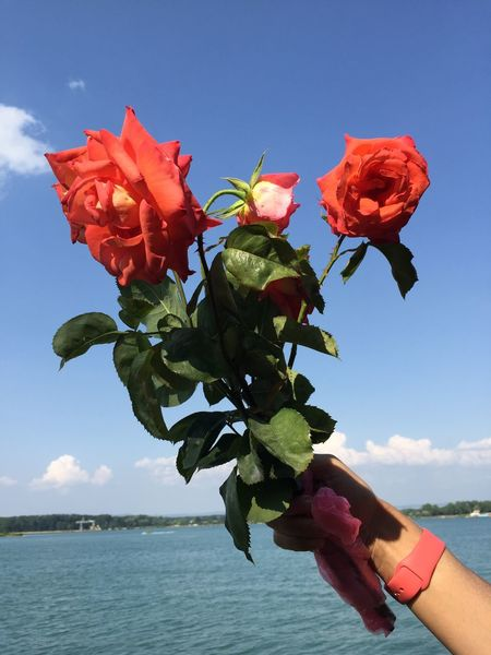 Adult Adults Only Beauty In Nature Close-up Day Flower Flower Head Fragility Freshness Holding Human Body Part Human Hand Mature Adult Nature One Person Only Women Outdoors People Red Sky Water