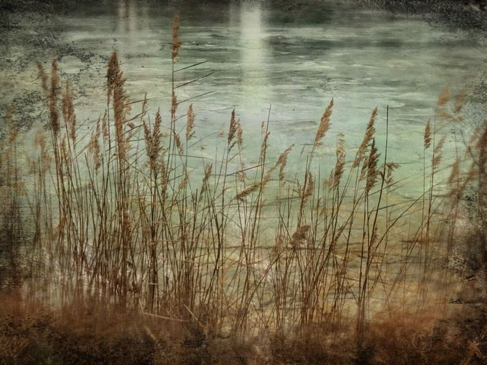 Close-up of grass in lake