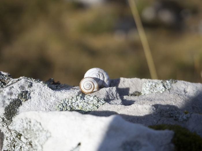 Snails on rock