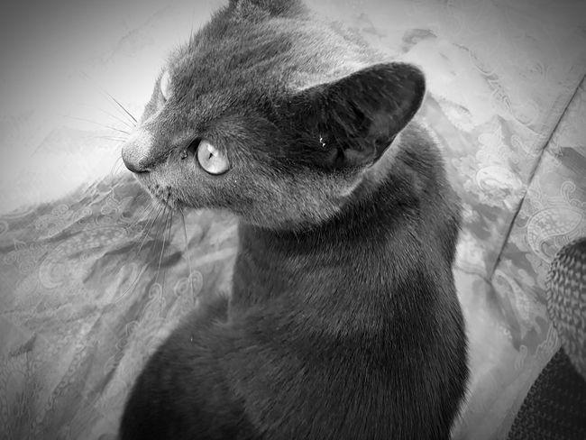 cat Outside Photography EyeEm Selects Close-up Animal Eye Animal Face Animal Nose Kitten Snout