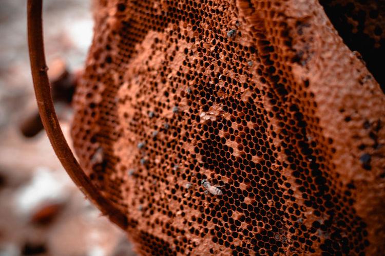 Honeycomb on