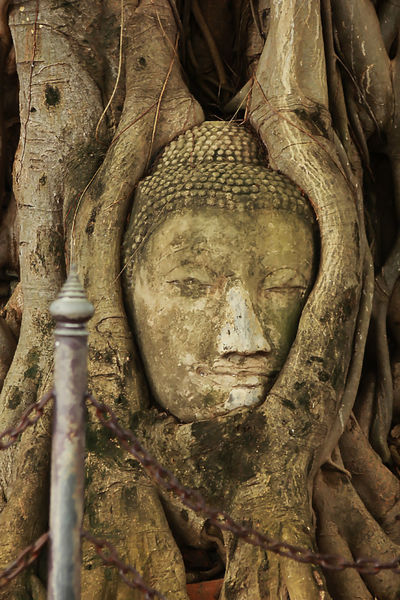 Old Buddha in AYUTTHAYA province, Thailand Old Buddha Ancient Civilization Architecture Art And Craft Belief Close-up Craft Creativity History Human Representation Idol Male Likeness No People Old Old Buddha Statue Old Buddha Image Place Of Worship Religion Representation Ruined Sculpture Spirituality Statue Stone Material The Past