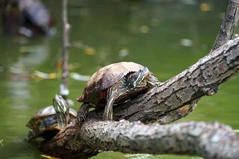 Turtle Nature