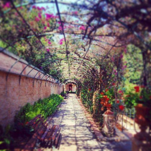 Jardines de Monforte València Beautifulgarden SPAIN Summer