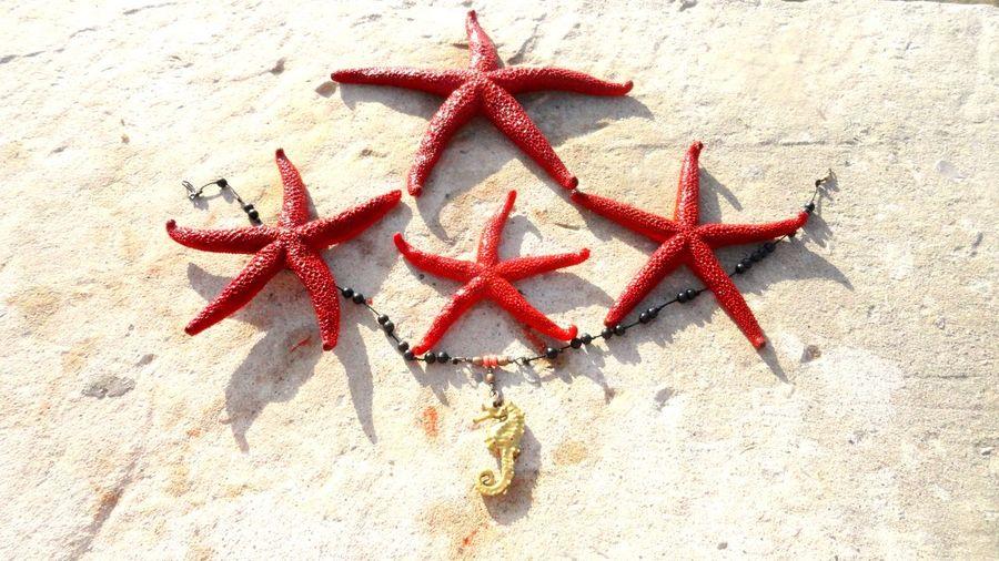 Star Shape Shape Starfish  Red No People Marine Sea Life Sand Beach High Angle View Animals In The Wild Animal Close-up Animal Wildlife Land Animal Themes Nature Day Sea Design Walrus My Best Photo The Minimalist - 2019 EyeEm Awards
