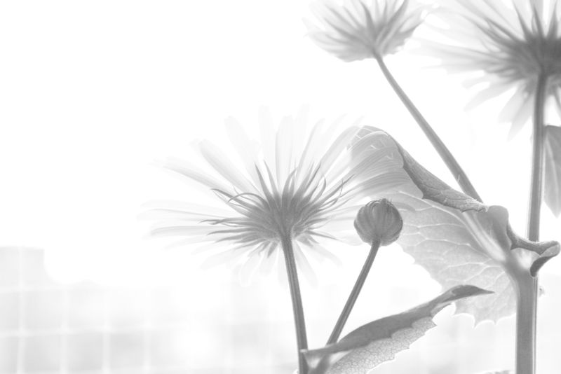 Beauty In Nature Blackandwhite Blooming Close-up Flower Fragility Freshness Growth Light And Shadow Nature Overexposed Plant EyeEmNewHere