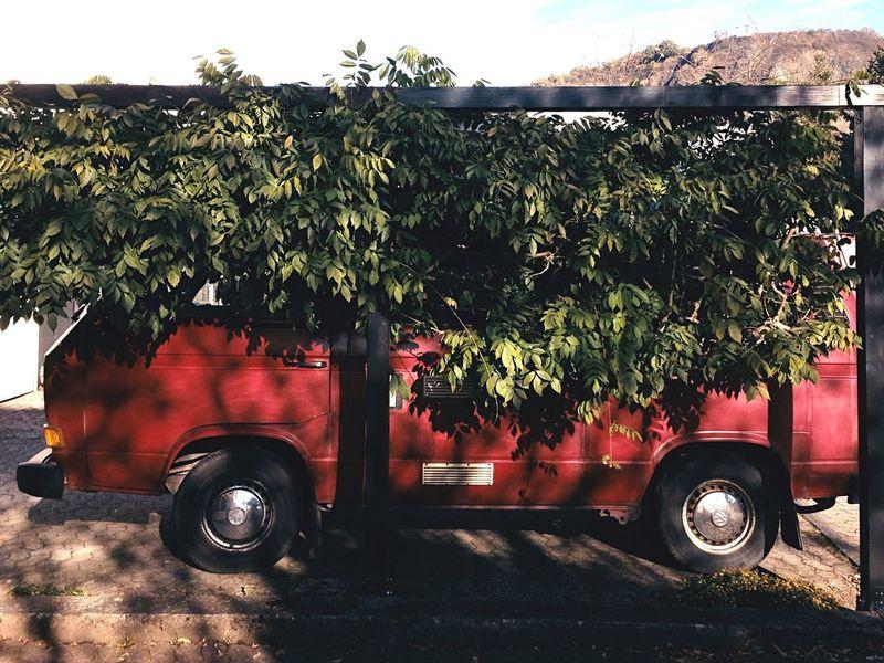 Van Vans Vanlife Camping Camp Travel Traveling Outdoors Tree No People