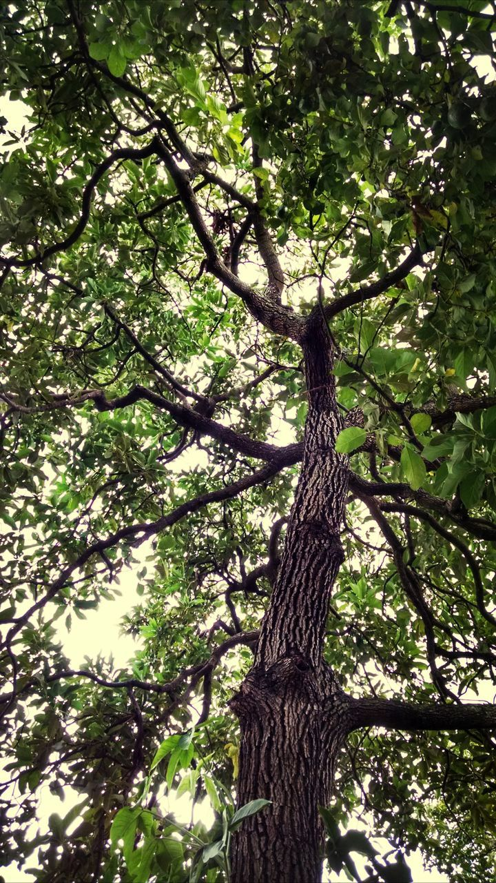 tree, tree trunk, growth, nature, low angle view, branch, day, no people, beauty in nature, green color, outdoors, forest