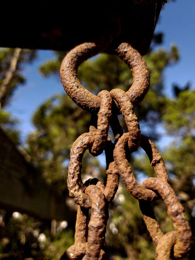 Swing chain Selective Focus EyeEm Selects Chainlink Chain Swing Chains Rusty Metal Rusty Chains Thick Climbing Close-up Deterioration Link