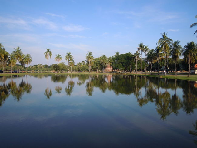Thailand Sukhothai Historcal Ruins Old Temple Historic Park Buddist Temple Meditation Sunny Days Stupa Pagoda Travelling Backpacker Calm Scene Landscape EyeEm Selects Palm Tree Water Reflections Lotus Flower Shadow And Light Coconut Palm Tree Tranquil Scene Tranquility Waterfront Reflection