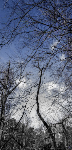 Just wow! What a beautiful scene. Trees And Sky No People Alone Nature Water Backgrounds Bird Full Frame Tree Branch Sky Close-up Animal Themes My Best Photo