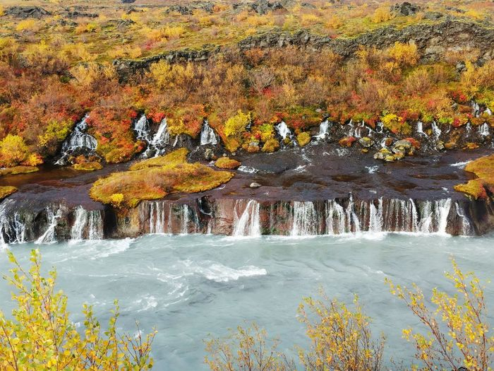 Landscape Hraunfossar Hraunfossar Waterfall Iceland Travel Destinations Travel In Iceland Falll Colors Fall Volcanic Landscape Blue Water Beauty In Nature Waterfalls Flowing Water Water Autumn Waterfall Flowing Idyllic Tranquil Scene Scenics Tranquility
