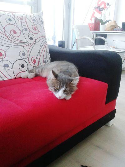 Toffy Cat♡ Kedicik Pisicik Pisipisipisi Abaza Kedi 😃😃😃