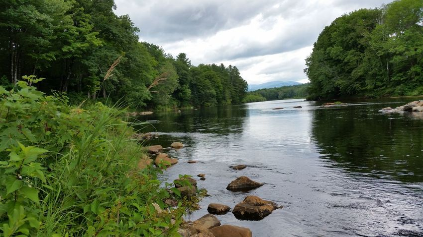 Beauty In Nature Hidden Gems  Scenic View Granite River Trees Pemi Local Hangout Evening Discover  New Hampshire New England  Campton, NH Summer Rain Summer Pemigewasset River Landscape Route 3 Natural Beauty