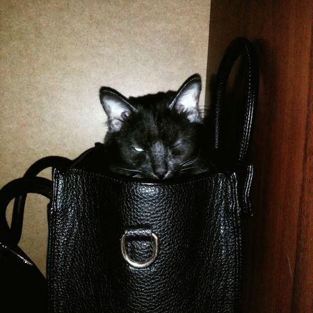 Моя хорошая <3 Animal Love Animal Photography Cat♡