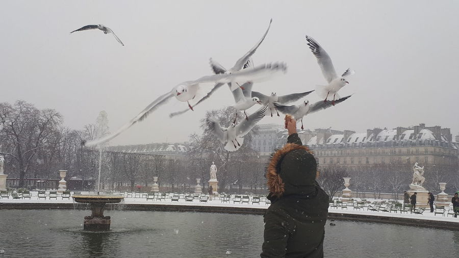 Garden City Cityscape Statue Flying Bird Winter Cold Temperature Nofilter Bird Water Flying Spread Wings Flock Of Birds Motion Seagull Silhouette Mid-air Snow Covered Snowfall Snow My Best Photo