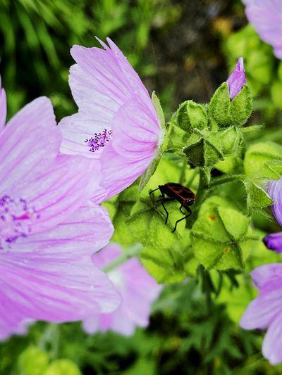 Close-up of fresh pink purple flower
