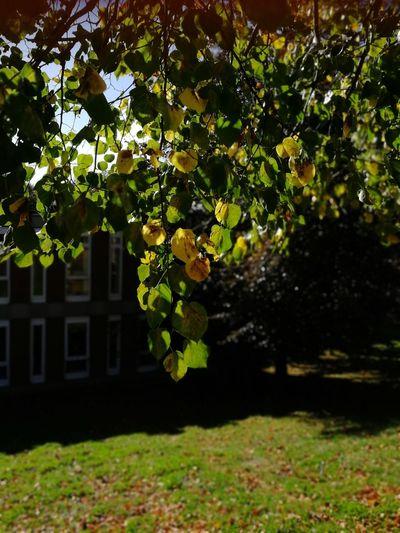 autumn leaves Autumn Leaves Autumn colors Fall Colors Fall Beauty Colourful Leaves Autumn Sun Warm Autumn Days