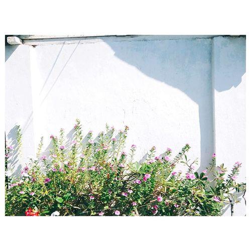 Softlight Taking Photos Surakarta Morning Light Flowers Whiteaddict