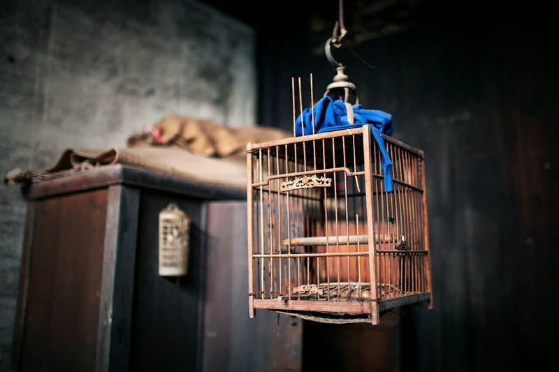 Low angle view of birdcage hanging at home