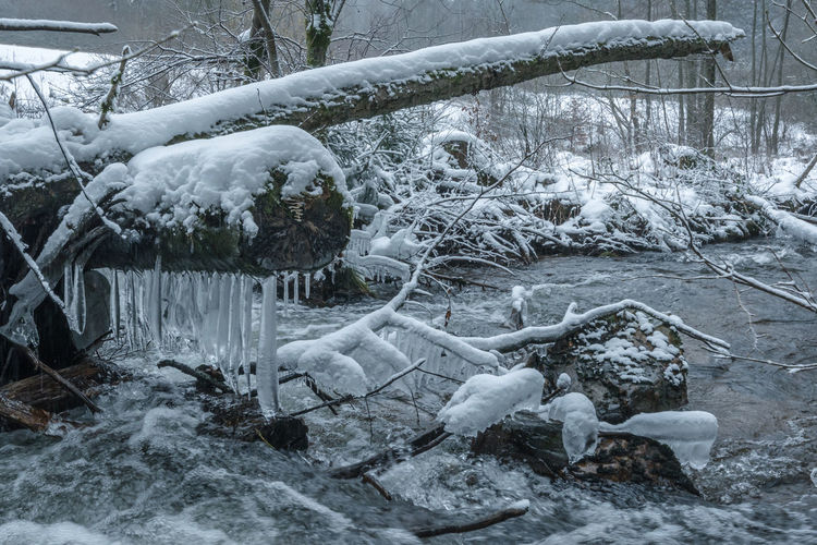 Traunbach im Winter Hunsrück Mountains Bare Tree Beauty In Nature Branch Cold Temperature Day Frozen Ice Icicle Nature No People Outdoors Snow Stream Tranquility Tree Weather White Winter