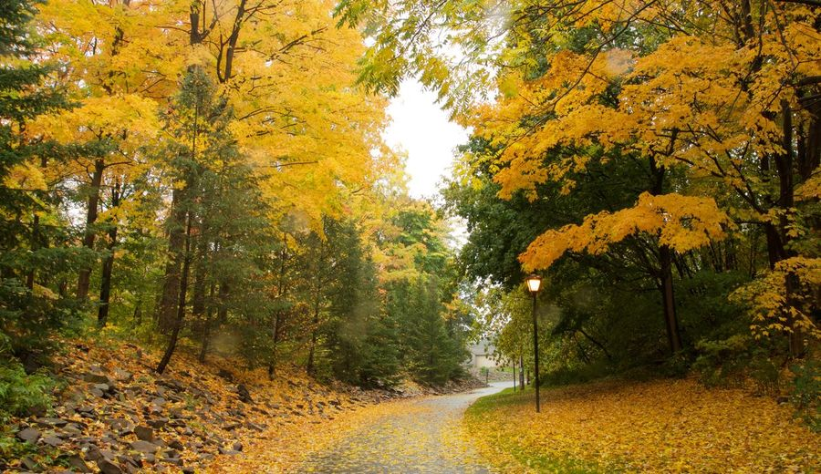 Erie Canal NY Autumn Beauty In Nature Day Growth Nature No People Outdoors Scenics Tranquil Scene Tranquility Tree Yellow