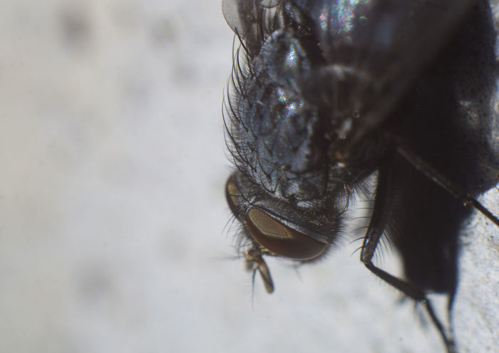 Fly Fly Macro Photography Macro Sony Picture_to_keep Picturetokeep_nature Bns_nature One Animal Animal Wildlife Animal Themes Animals In The Wild Close-up Day No People Outdoors Trapped Nature
