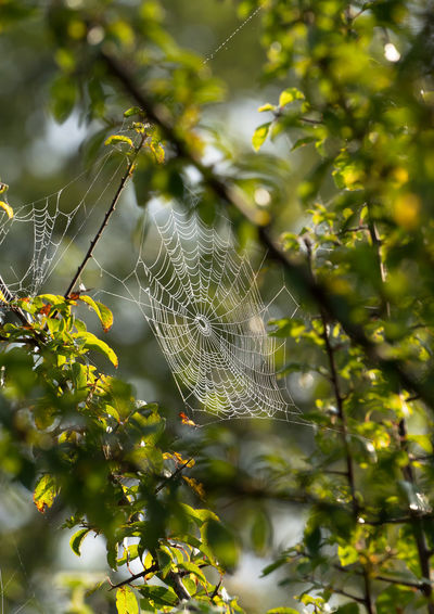 Spider's web Beauty In Nature Branch Branches Cobweb Leaves Nature Outdoors Spider Spider's Spider's Web Tree Web
