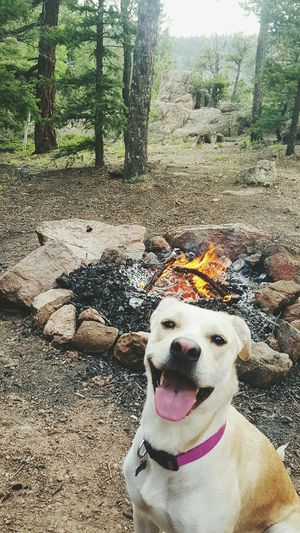 Colorado Coloradocamping Dogs Of EyeEm AdventuresWithDazey