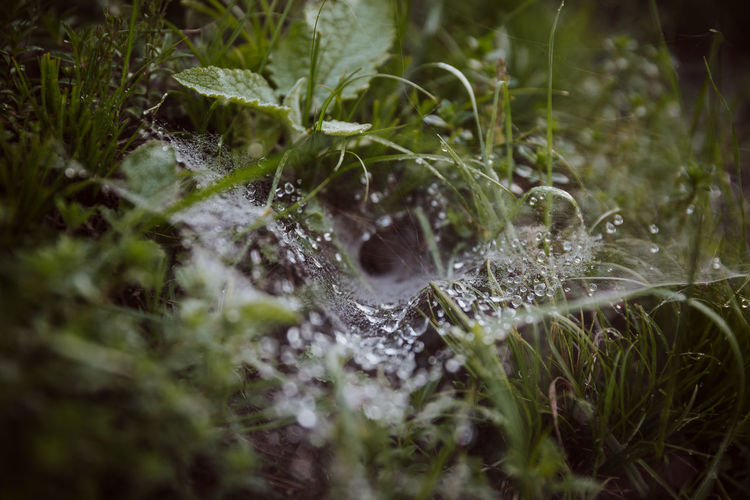 Close-up of wet spider web on moss