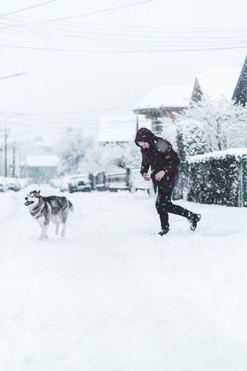 Husky Snow Winter Domestic Pets Mammal Domestic Animals Animal Themes Animal Cold Temperature Canine Dog One Animal Vertebrate Field Nature White Color Day Full Length Outdoors Snowing Warm Clothing
