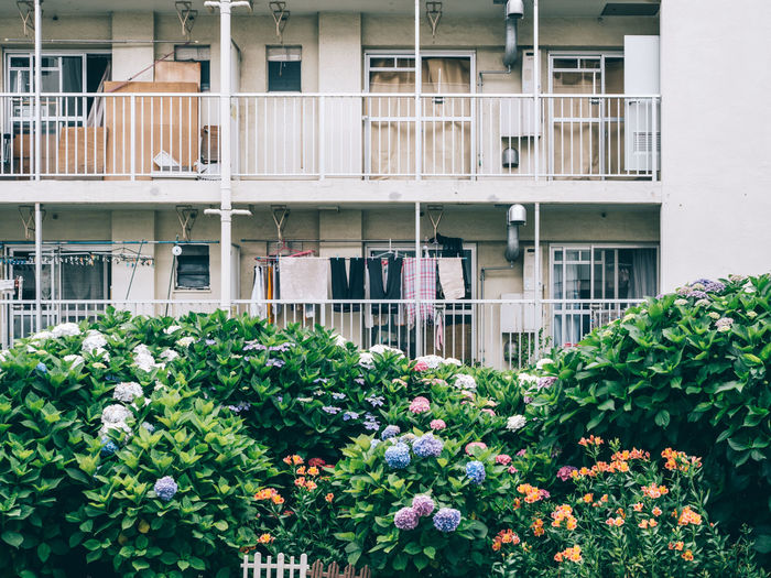 Flowering plants by building