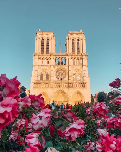 Flowers Church Plant Flower Sky Flowering Plant Architecture Built Structure Nature The Past Building Exterior Pink Color Travel Destinations Clear Sky Beauty In Nature Low Angle View Freshness History No People Building City Day
