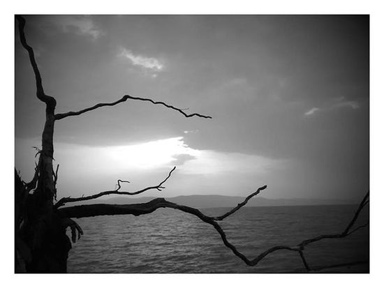 Google Photos! Googlephotos Autoawesome B &w Surprise Nature Evenings Peaceful Sunset_pics Motorola
