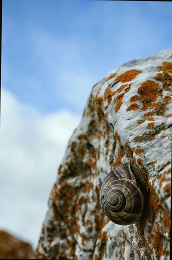 Close-up of snail on wall against the sky