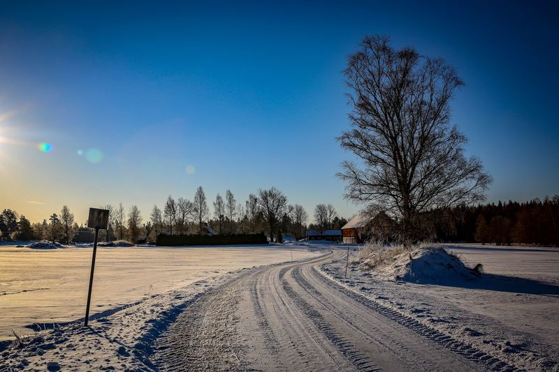 Bare Trees On Snow Field Against Clear Blue Sky