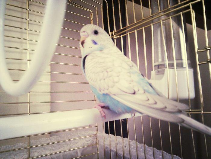 Bird Cipetpet Lezzetli