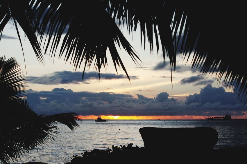 Hello World Hello Seychelles Palm Tree Silhouette Sea Sunset Beach Nature Beauty In Nature Sky Is On Fire Sky Water Seychelles Outdoors Night Ocean Taking Pictures Click Click 📷📷📷 Paradise Traveling Exploring When The Sun Goes Down Real Life Colorful Africa Been There.