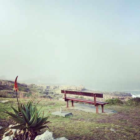 Nature Benches No People Aloes Sea And Sky Scenics Soulseeker Grass