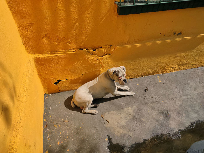 Portrait of dog relaxing on wall